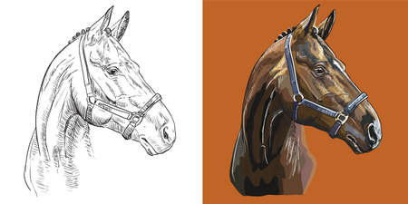 Realistic head of sports thoroughbred horse. Vector black and white and colorful isolated illustration of horse. For decoration, coloring book, design, prints, posters, postcards, stickers, tattoo, t-shirt