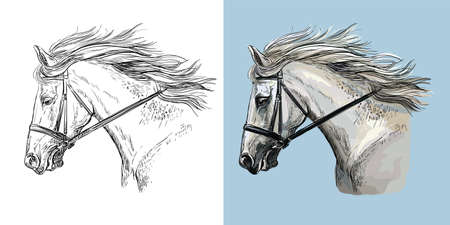 Realistic head of white sportive horse. Vector black and white and colorful isolated illustration of horse. For decoration, coloring book, design, prints, posters, postcards, stickers, tattoo, t-shirt, goods, souvenirs
