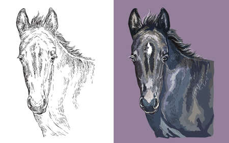 Realistic head of young black pony. Vector black and white and colorful isolated illustration of horse. For decoration, coloring book, design, prints, posters, postcards, stickers, tattoo, t-shirt