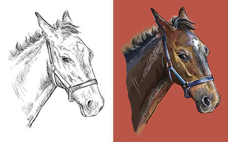 Realistic head of young horse in profile. Vector black and white and colorful isolated illustration of horse. For decoration, coloring book, design, prints, posters, postcards, stickers, tattoo, t-shirt