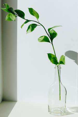 a sprig of green plant in a small vase on a white windowsill in natural light