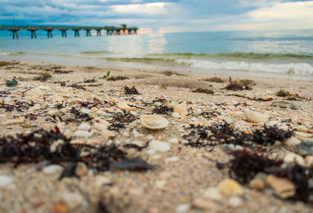 close up of seaweed and shells on the beach at sunrise with pier and blue cloudy sky in the background