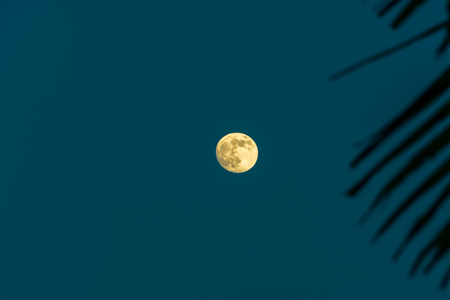 warm waxing gibbous moon rising in the sky behind palm fronds