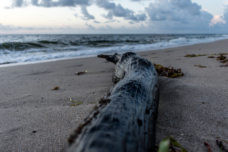 close up of wet drift wood on the beach on a cloudy morning Stock Photo