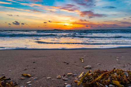 seaweed and shells on the sandy shore on an early morning at the beach Stock Photo