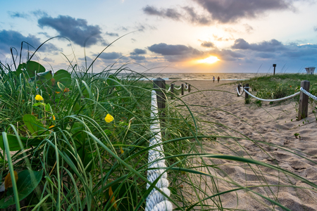 Green grass yellow flower and sandy path towards sunshine over the ocean