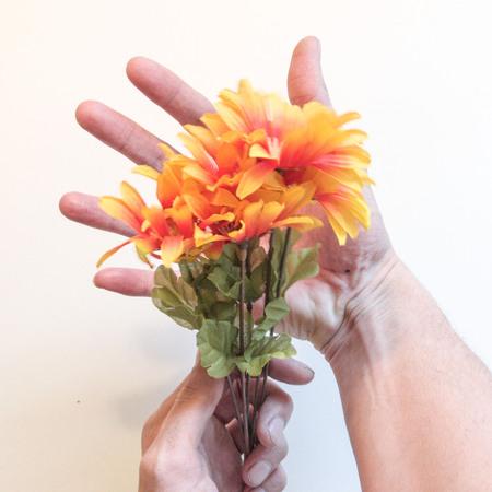 hand hold orange flowers