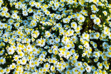 Beautiful flowers grow beautifully and densely in the garden.