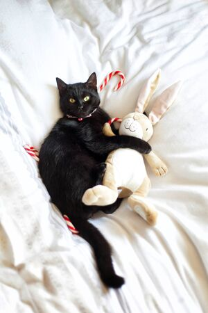Black cat is hugging a stuffed animal with Christmas candy canes on the background