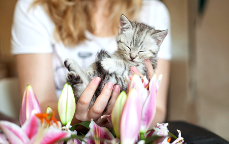 A blonde unknown woman holding a sleeping gray kitten in her hands.