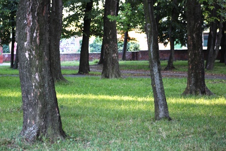 trees in park in eneving sun rays Stock Photo