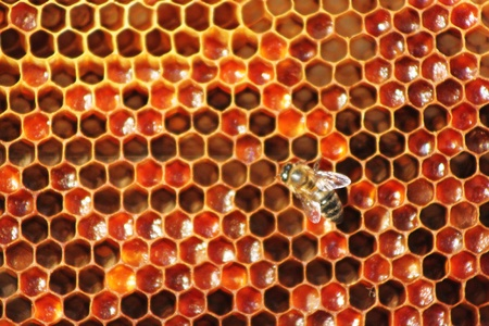 Honey comb and a bee working Stock Photo - 10756363