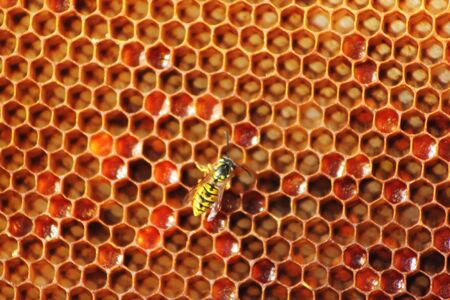Honey comb and a bee working photo