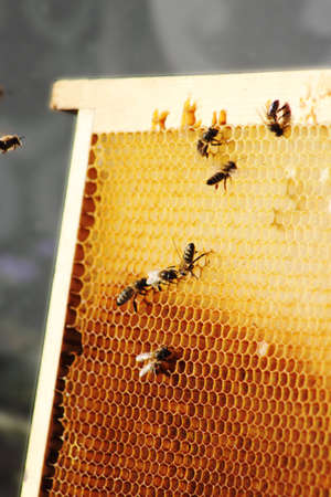 Queen bee resting near edge of wooden hive frame Stock Photo