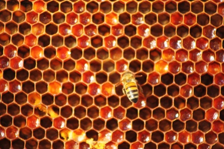 Honey comb and a bee working Stock Photo