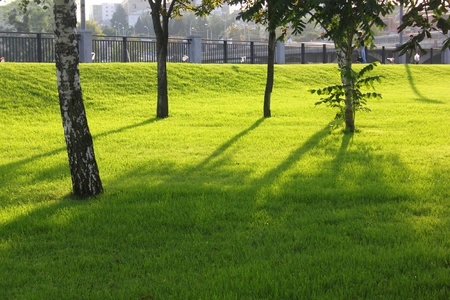 Trees and green grass lit by the sun on the waterfront