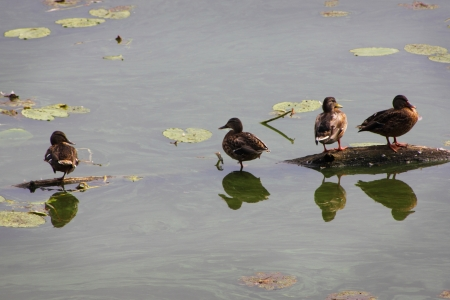 Damaged water in the pond. Even the ducks do not wish to swim. Stock Photo