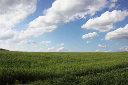 Field of green wheat  Beautiful Ukraine