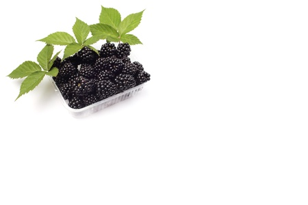 Fresh blackberry with green leaves - isolated Stock Photo
