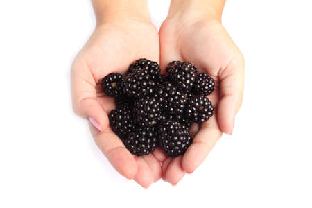 Blackberries in woman hands