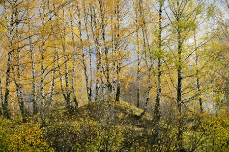 hillock: The autumn forest