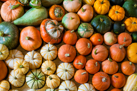 squashes and pumpkins different varieties