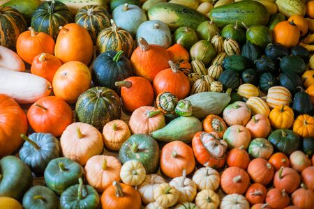 horizontal photo of heirloom diffrent varieties squashes and pumpkins Banco de Imagens