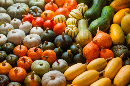 horizontal photo of heirloom different varieties squashes and pumpkins Banco de Imagens