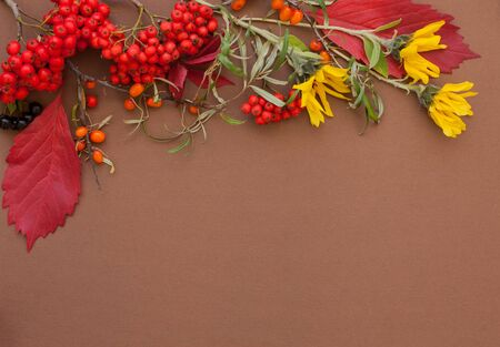 Autumn flat lay background border with copy space. Knitted sweater, red maple leaves, rowanberry, yellow flowers on brown paper Stock Photo