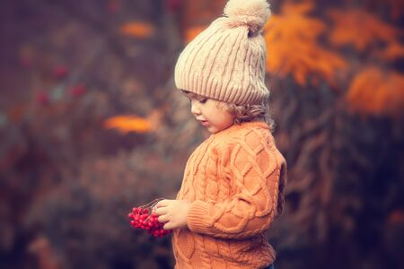 Cute toddler girl wearing sweater, knitted hat and scarf, holding rowanberry. fall, red and yellow leaves, toned photo Stock Photo