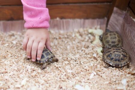 Children contact exotic zoo, little kid touching turtle
