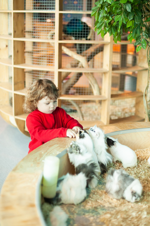 Adorable little girl feeding the cavy at the petting zoo Imagens