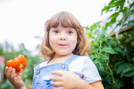 Funny little girl in the garden, holding red organic tomato, agriculture and child