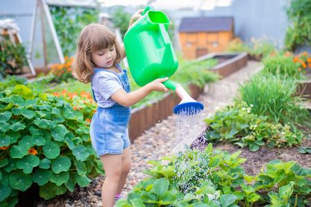 Adorable girl watering plants in the garden at summer, seasonal garden works. Little gardener