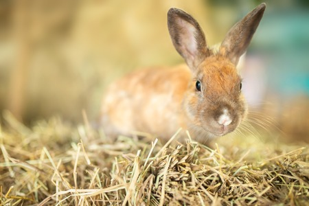Easter. Adorable little rabbit at the farm, sunny picture