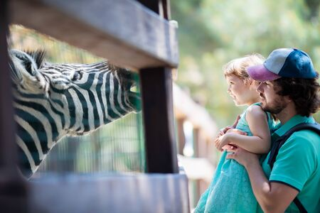 Zoo visitors little girl and her father feeding zebra through the fence at the petting zoo, close up.