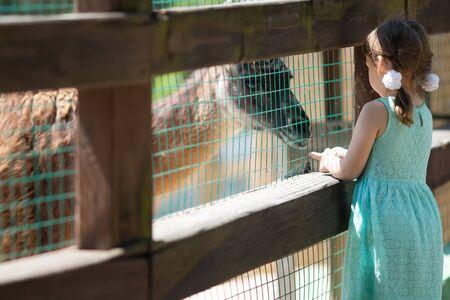 Little girl feeding alpaca lama through the fence at the petting zoo, close up. 版權商用圖片