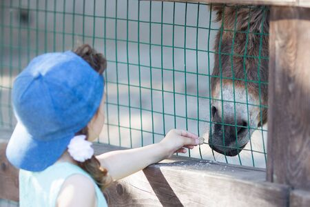 Little girl feeding donkey through the fence at the petting zoo, close up. 版權商用圖片 - 124745962