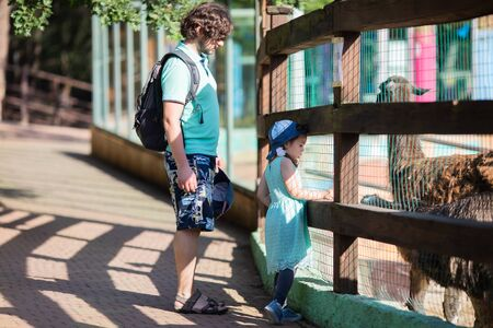 Zoo visitors little girl and her father feeding alpaca lama through the fence at the petting zoo, close up. 版權商用圖片