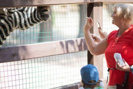 Zoo visitors feeding zebra through the fence, close up. 版權商用圖片 - 124745899