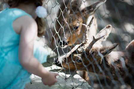 Little girl feeding deer through the fence at the petting zoo, close up. 版權商用圖片 - 124745859