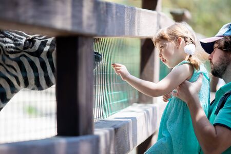 Zoo visitors little girl and her father feeding zebra through the fence at the petting zoo, close up. 写真素材 - 124745864