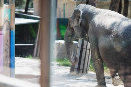 Poor elephant in the zoo over the glass in the small enclosure.