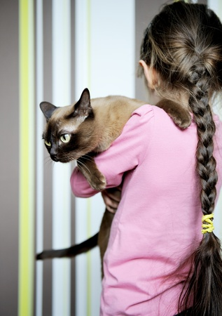 plait: Toddler girl carrying burma cat in her hands
