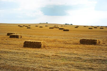 Agricultural field full of rectangular hay bales photo