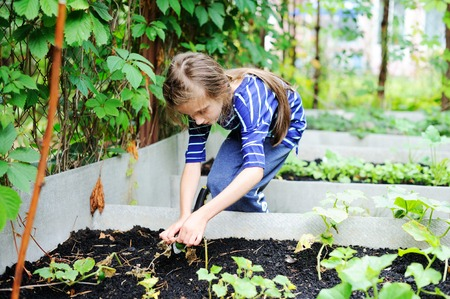 Gardening - little kid girl  working in vegetable garden Stock Photo