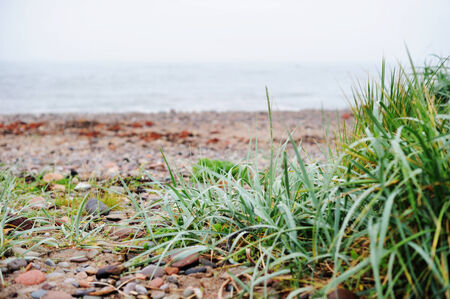 bracing: Wet grass with drops on the sea shore  on a cold  foggy day Stock Photo