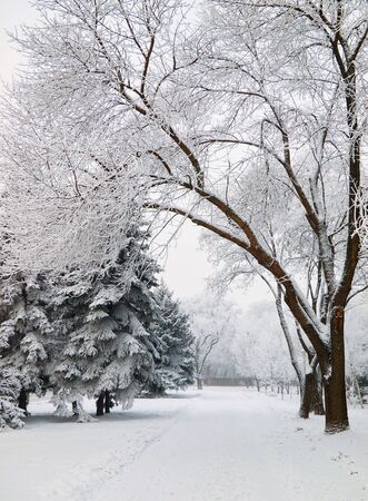 snowbound: Snowbound walkway through the trees in the city park covered with frost