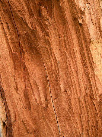 heartwood: Fracture of red timber demonstrates the pith and the heartwood