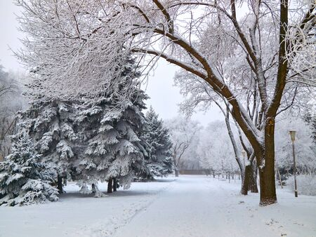 snowbound: Snowbound walkway through the trees in the city park covered with frost snow Stock Photo